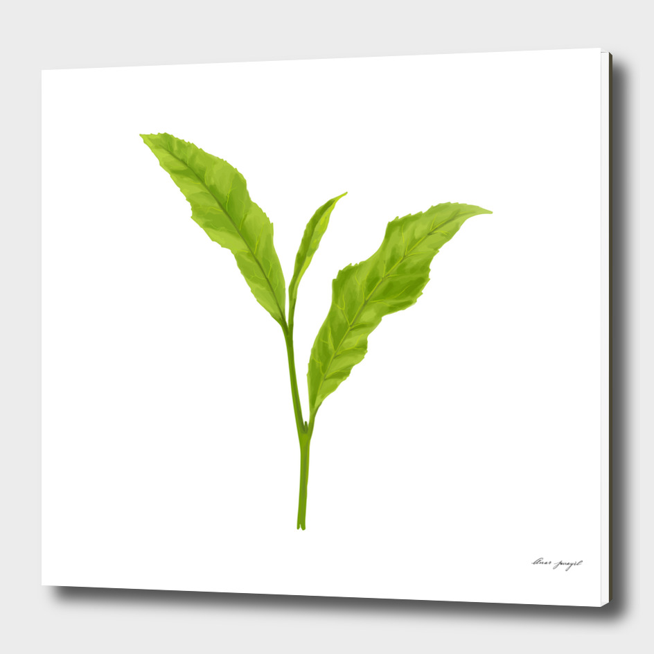Tea leaf hand painting