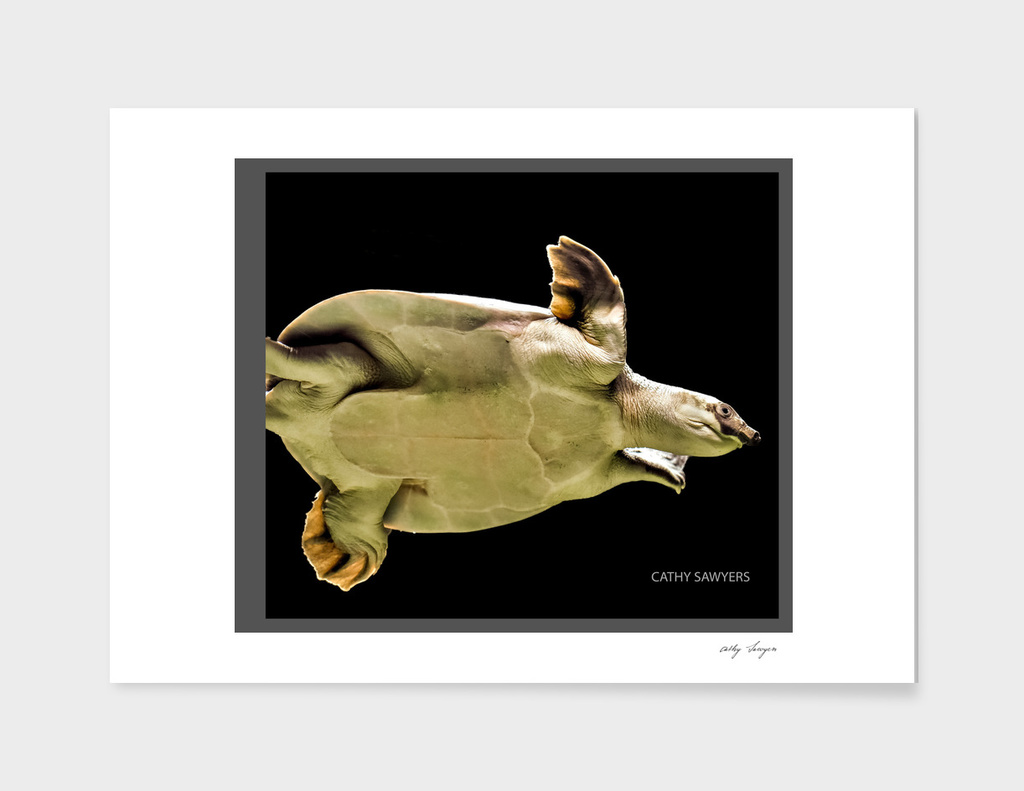 Turtle Swim _ Landscape