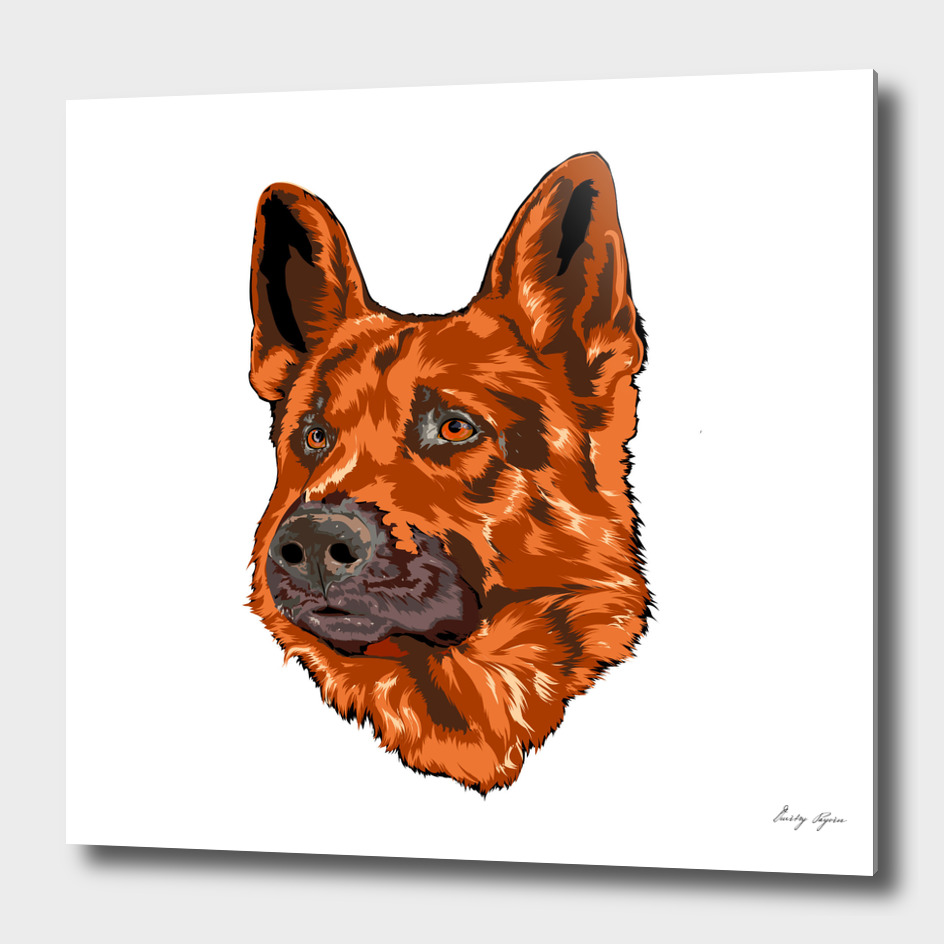 German shepherd portrait