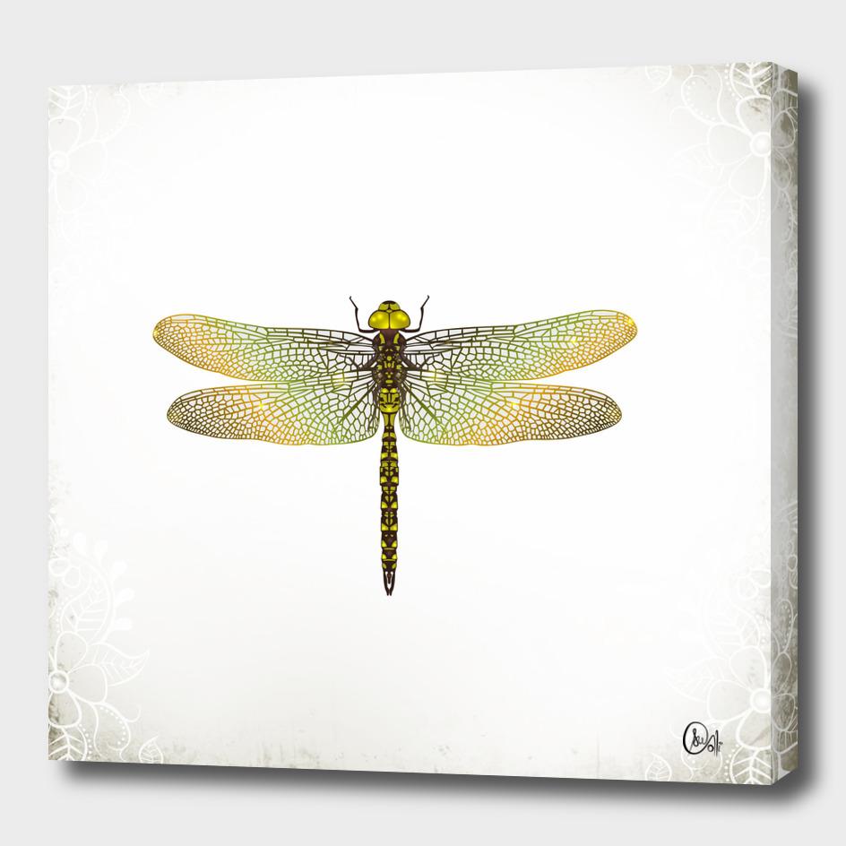C13D Dragonfly