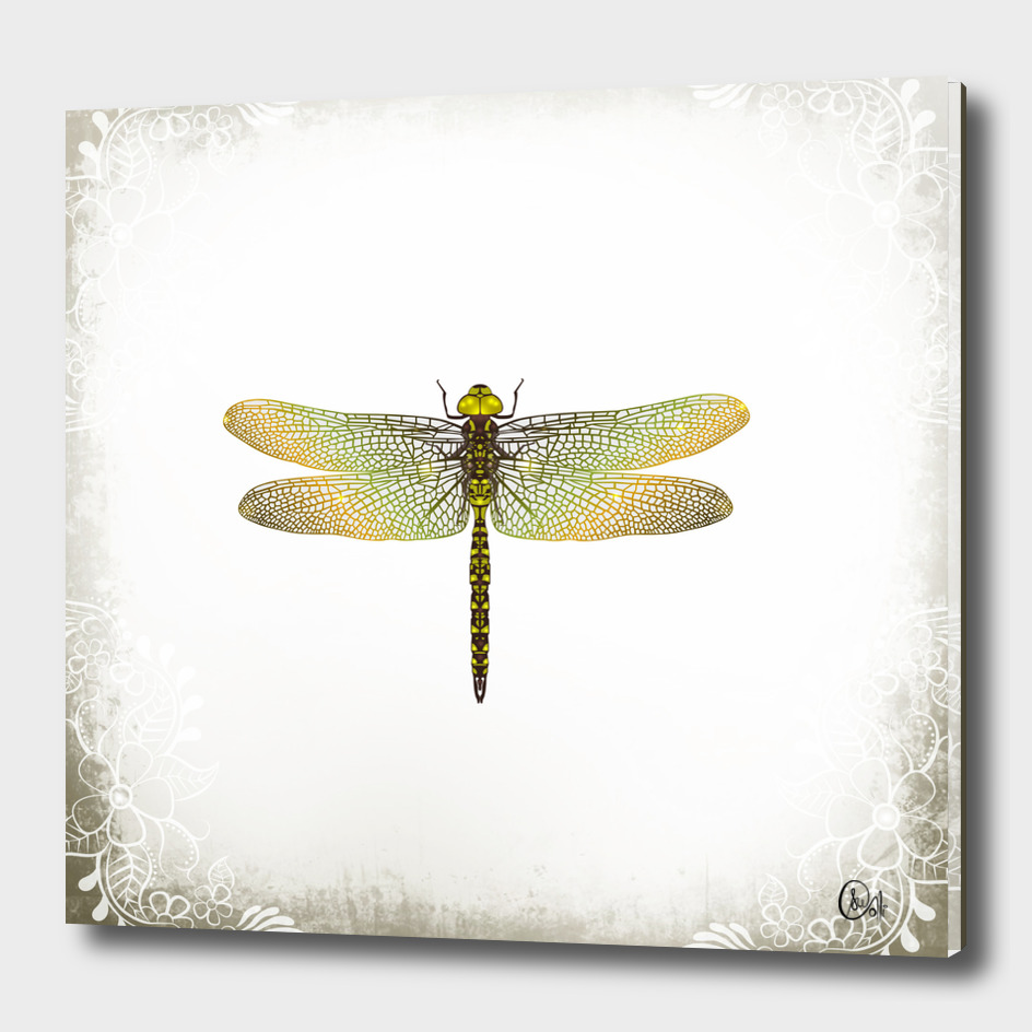 C13D Dragonfly