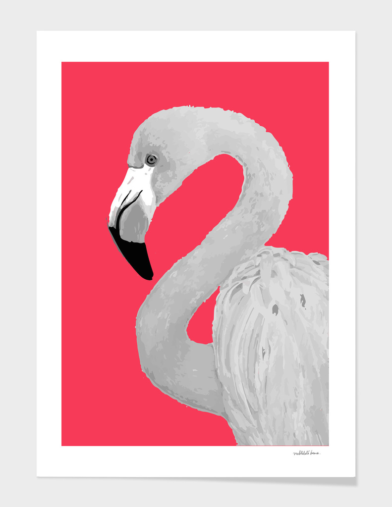 Flamingo Series 2