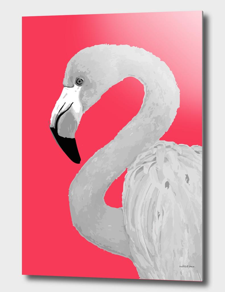 Flamingo Series 2