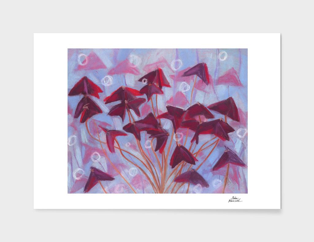 Oxalis / Purple Shamrock