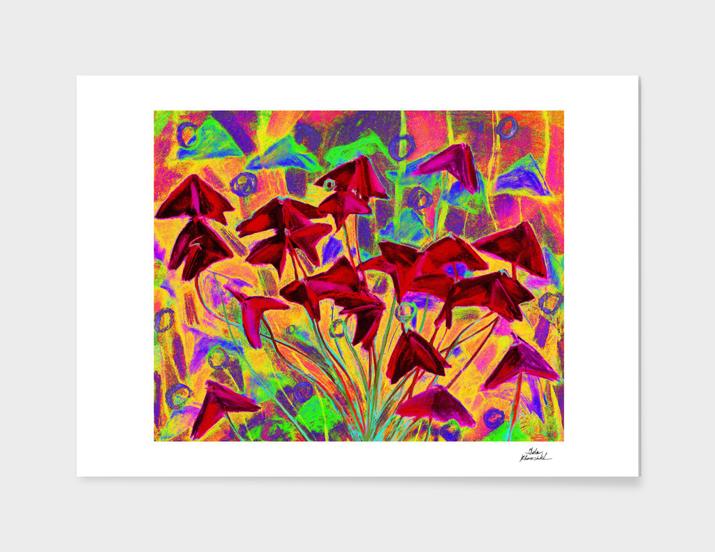 Oxalis (psychedelic version)
