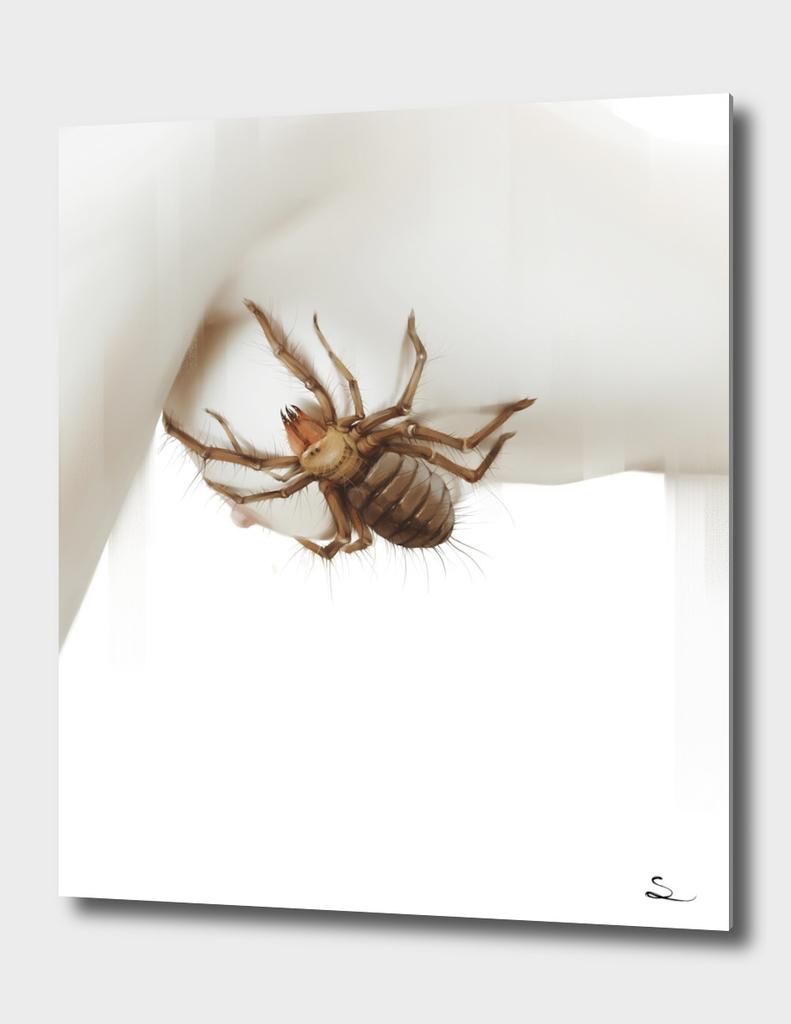Arachnophobia III
