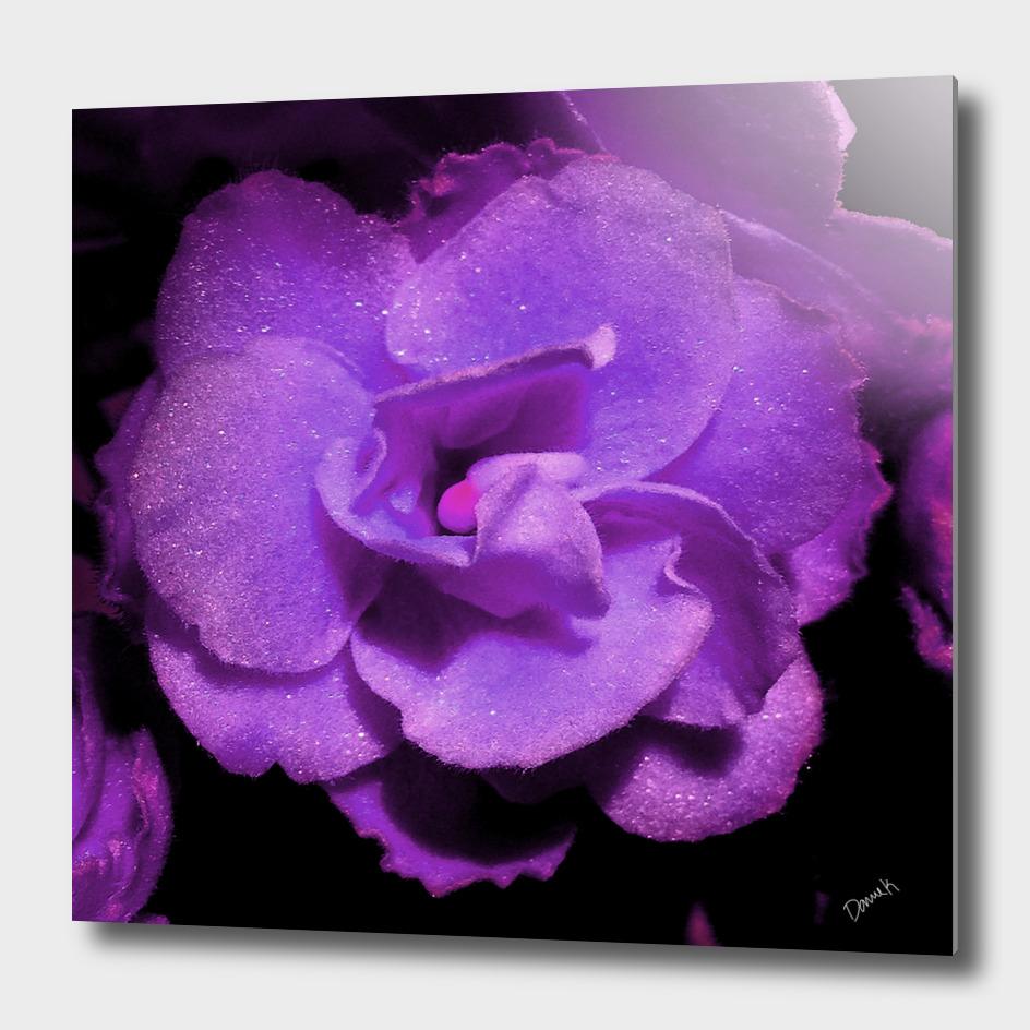 Violetina