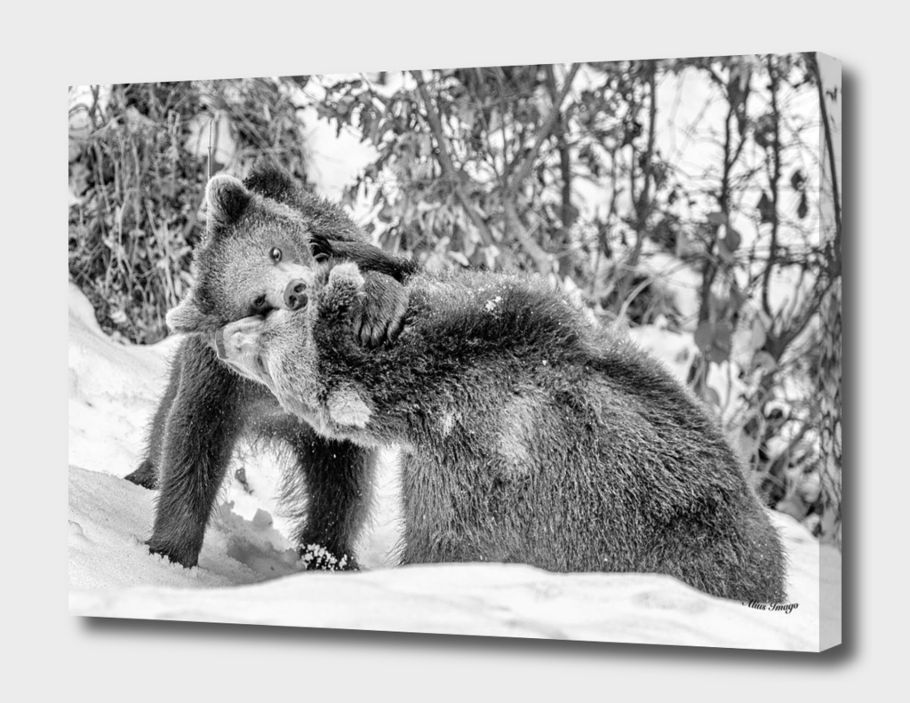 Eurasian Brown Bear Cubs (Black & White Edition)