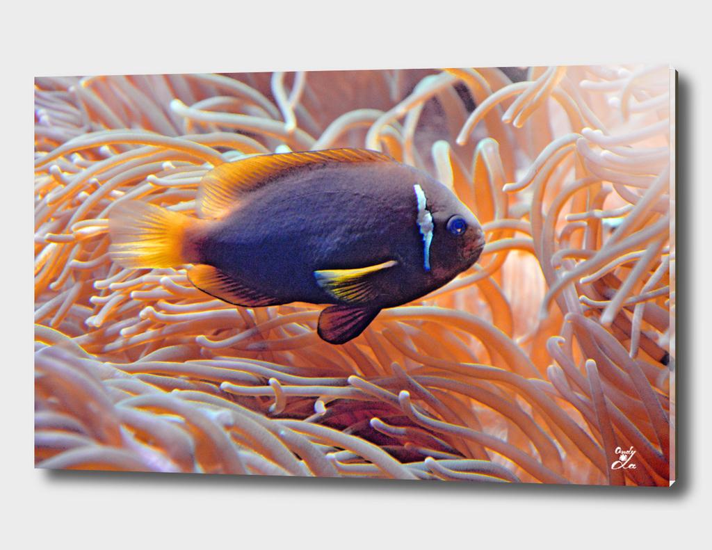 Little Fish. Underwater World.