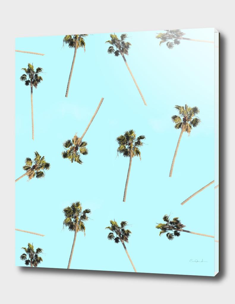 Palms into the Sky