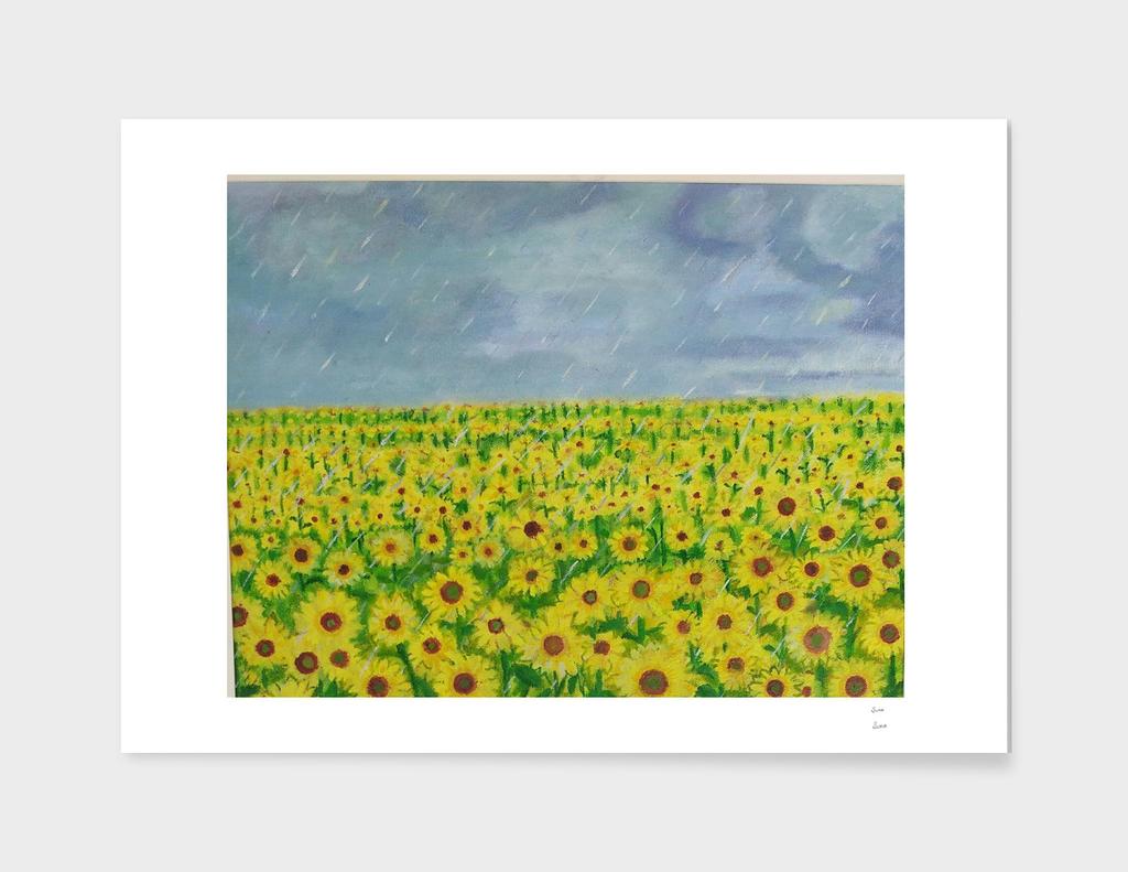 Rain on Sunflowers