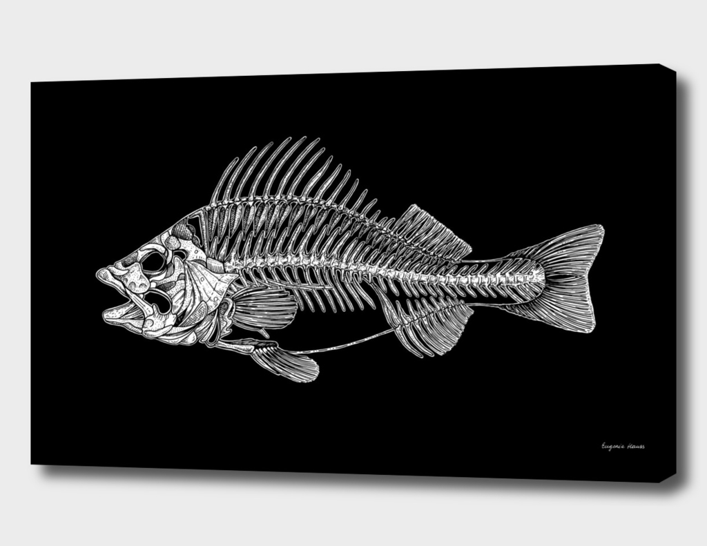 The Fish Skeleton (Black Background)