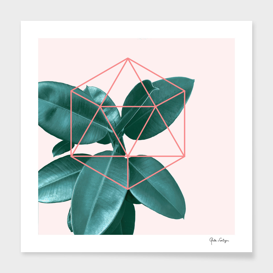 Geometric greenery II