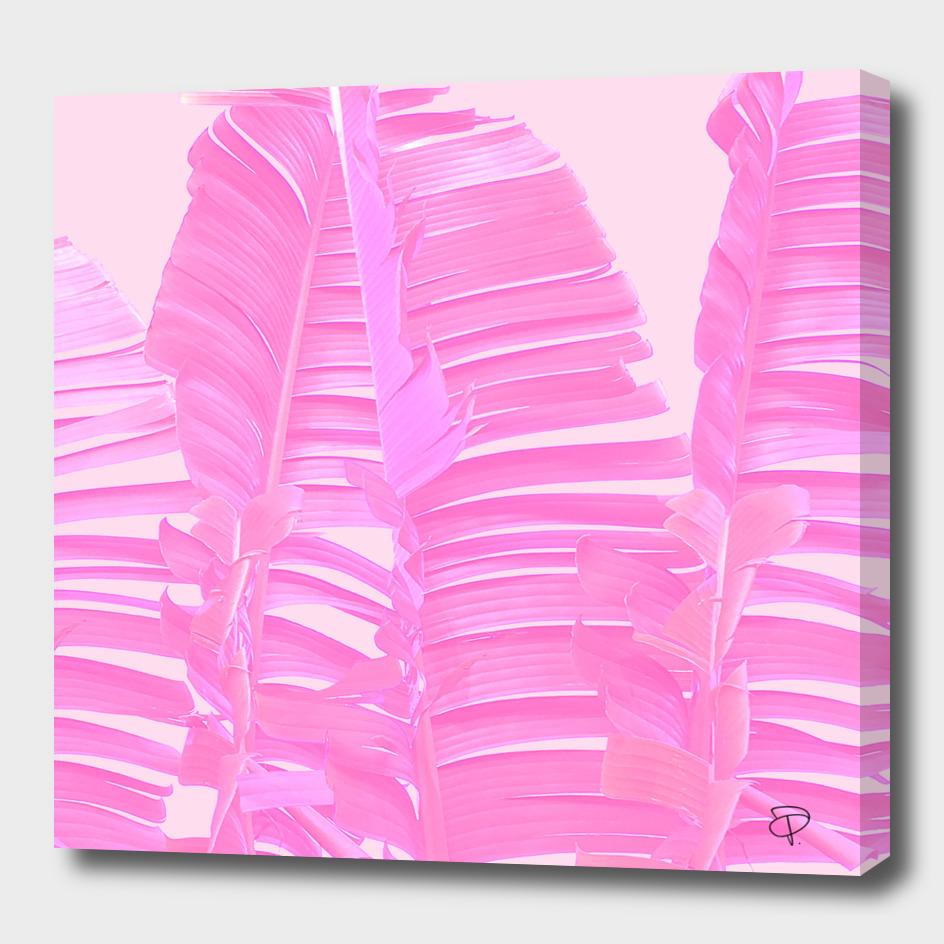 Pink Whisper