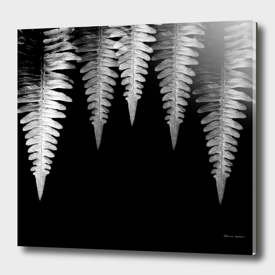 Black&white Fern