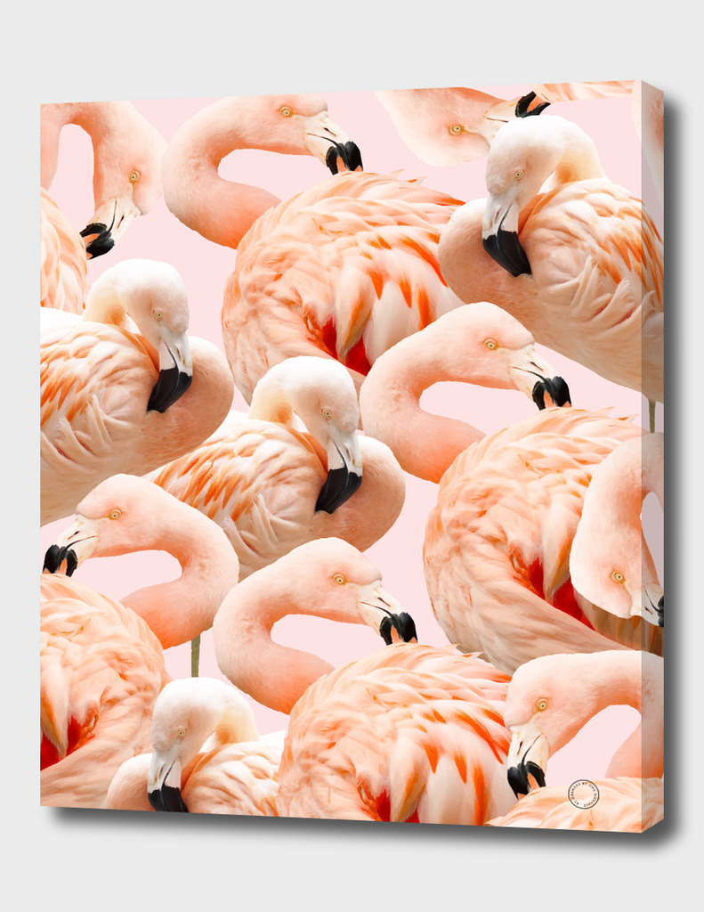 Flamingo Blush