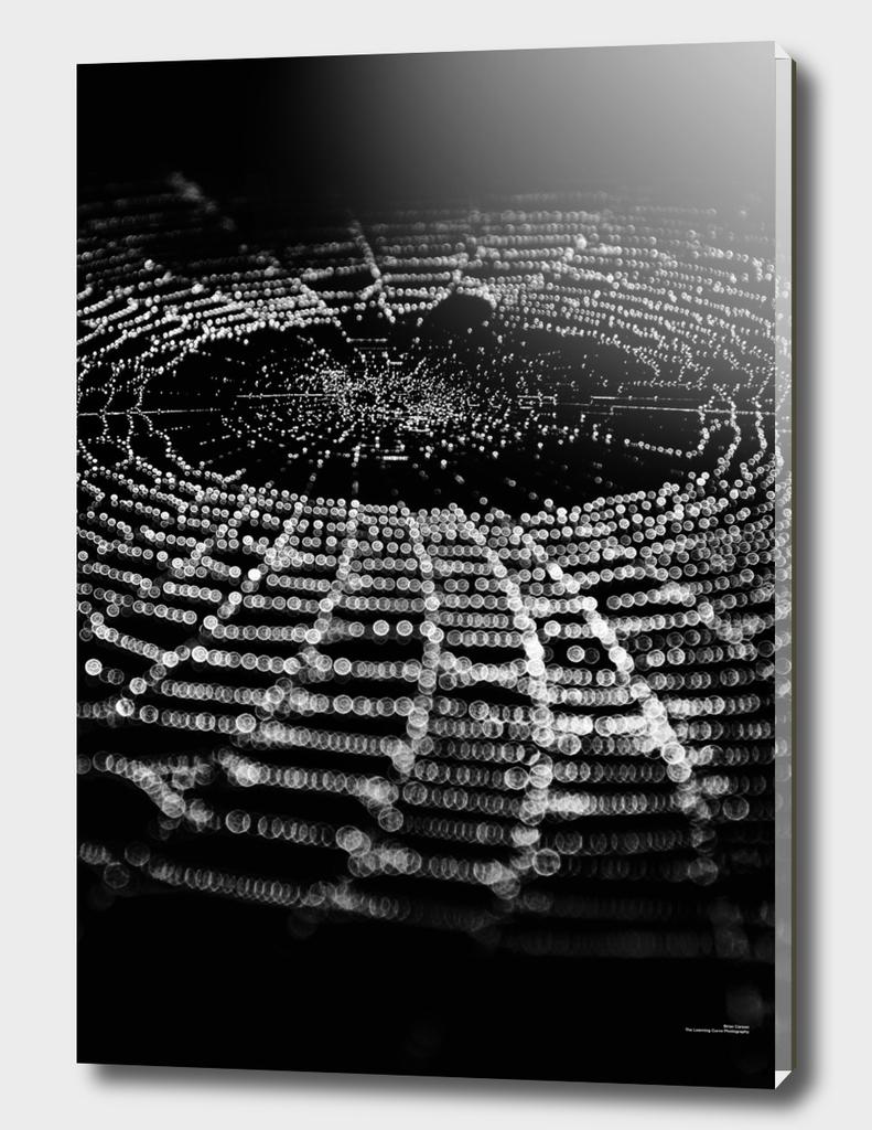 Spiderweb No 1