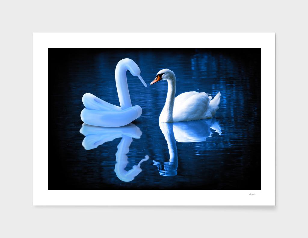 When Swans Meet