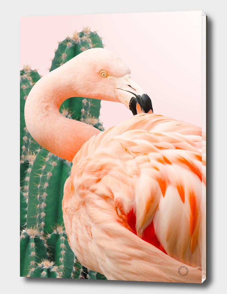 Flamingo & Cactus