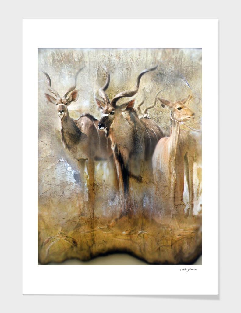 kudu savannah