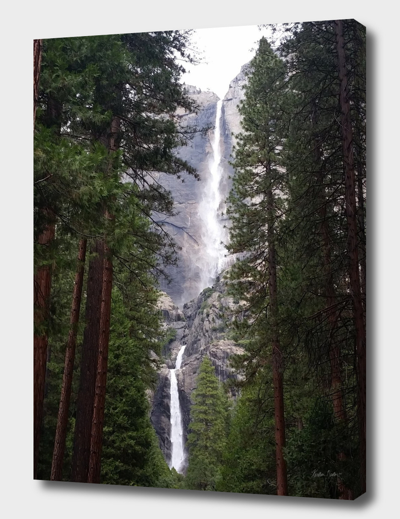 Cedars & Falls