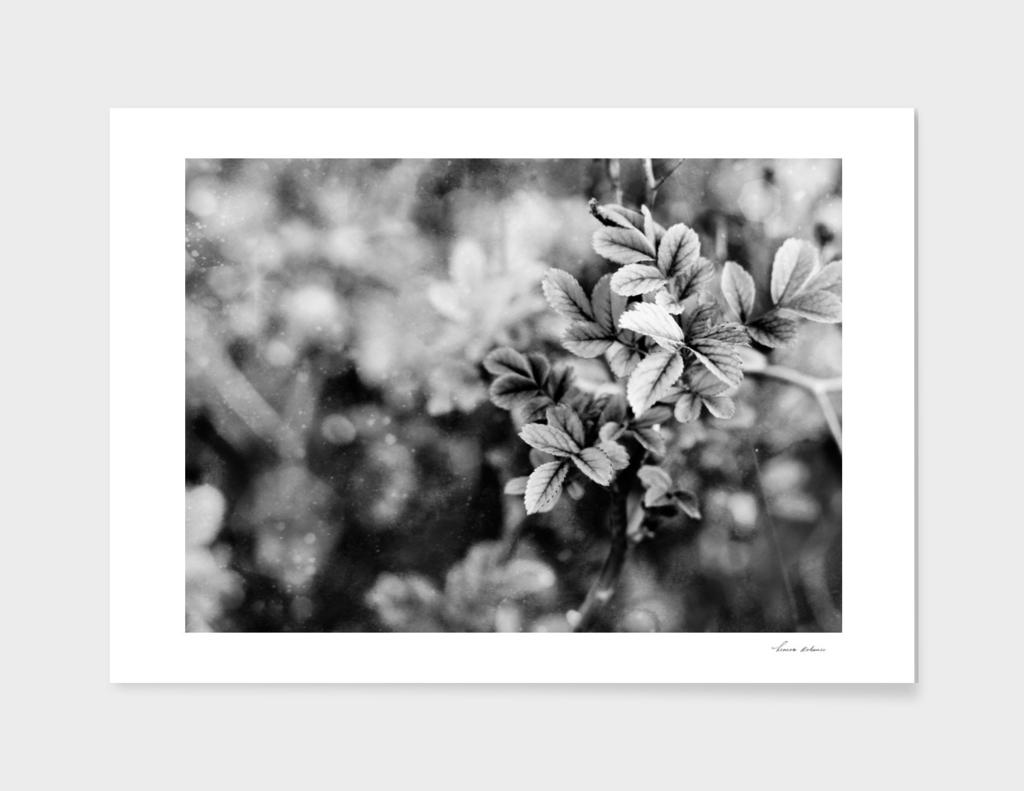 black and white spring