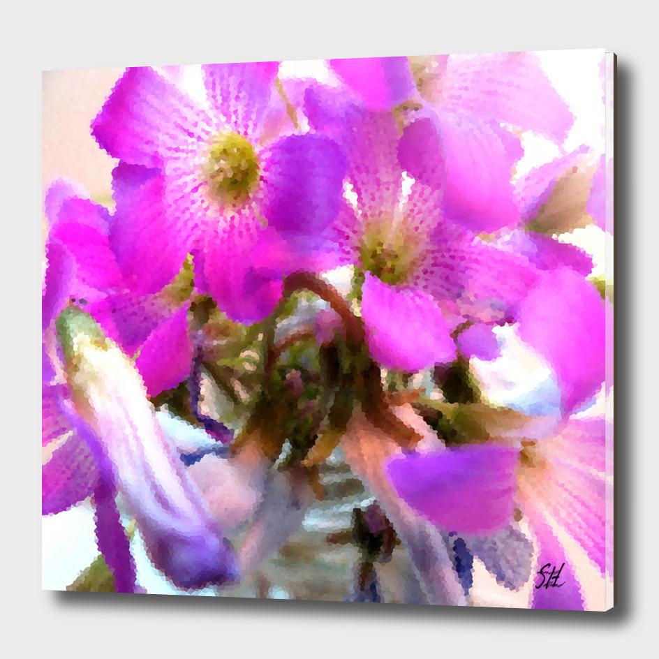 Purple Wood Sorrel Flowers