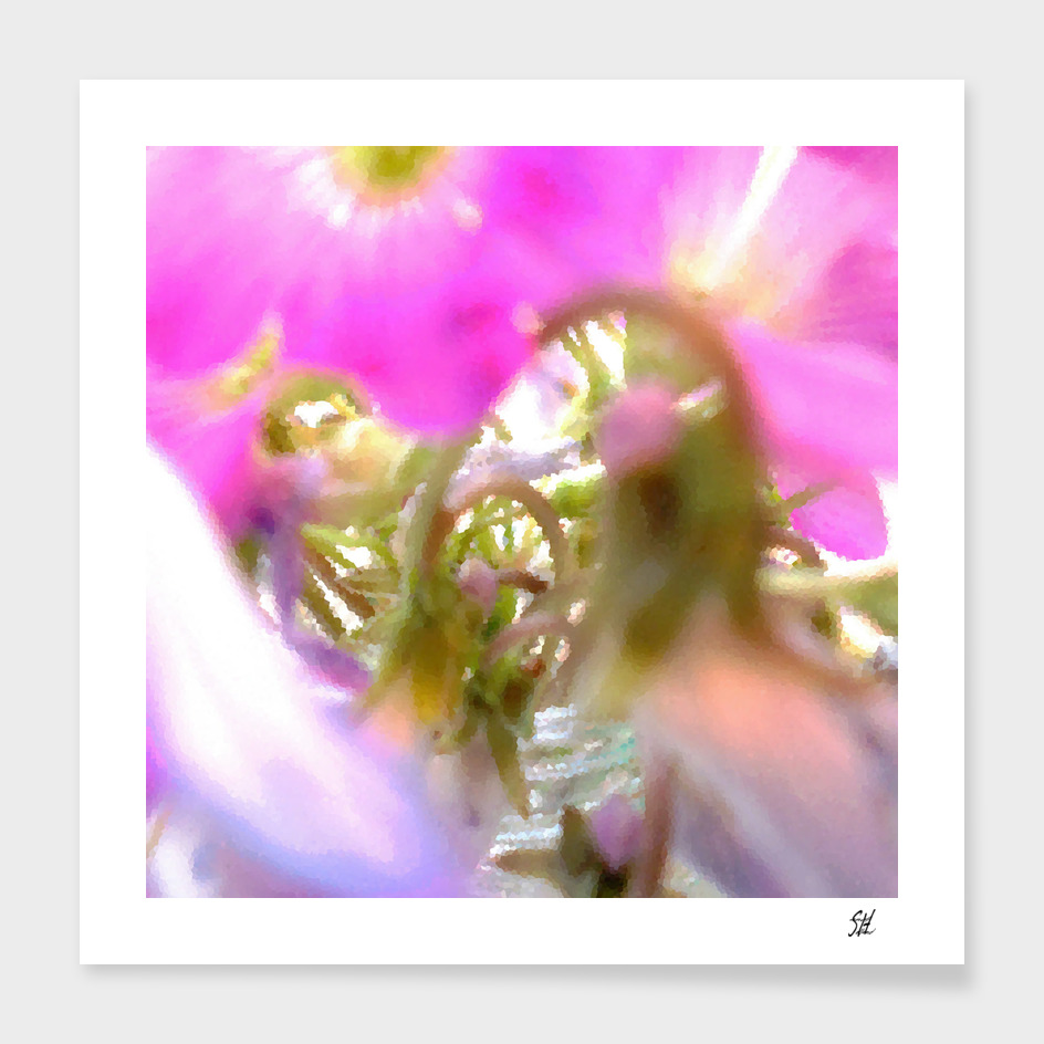 Purple Wood Sorrel Flower Blossoms