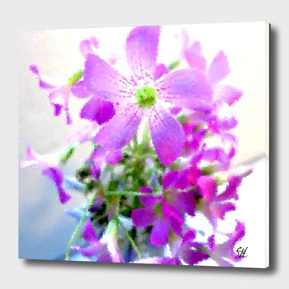 Purple Wood Sorrel Flowers III