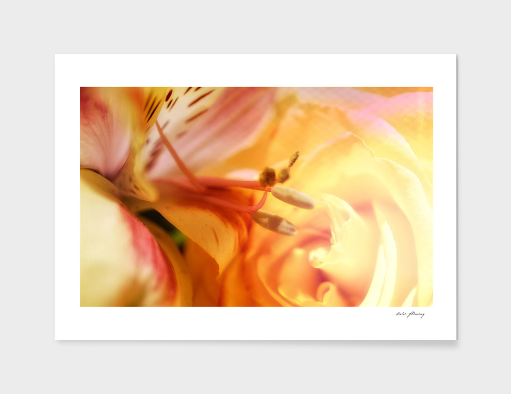 Mindful Macro. FlowerLove (2)