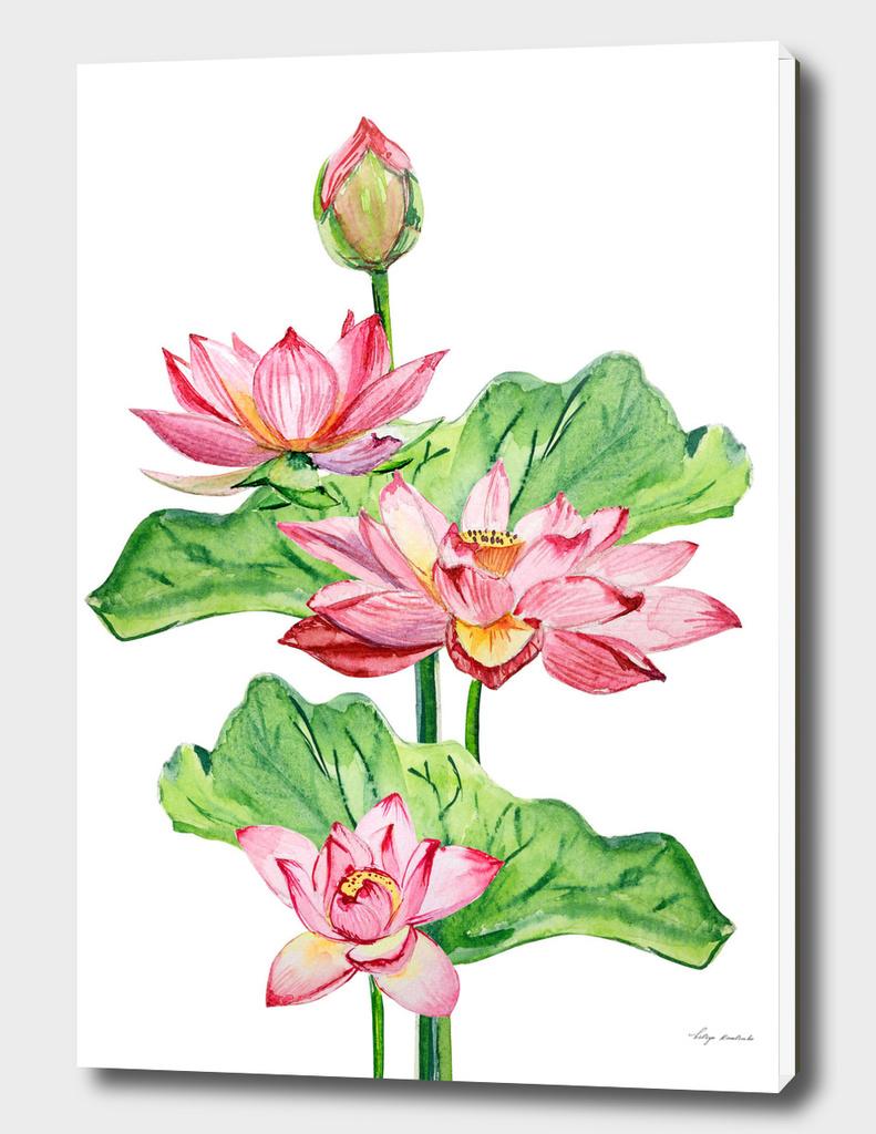 Watercolor flowers lotuses