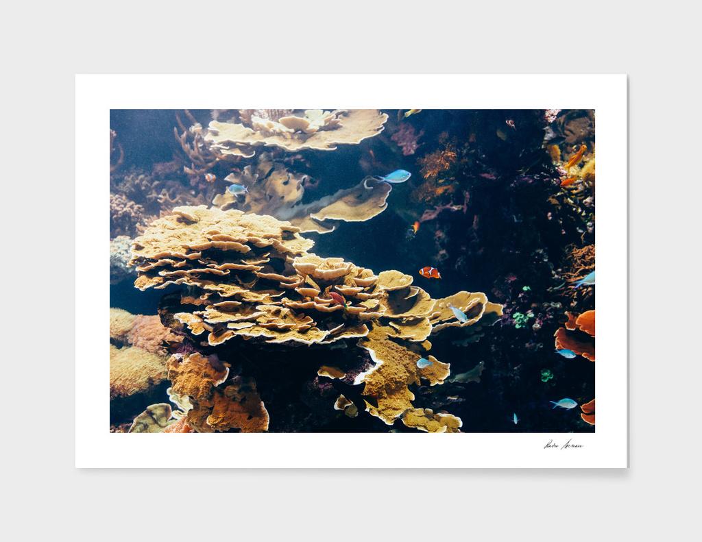 Small Coral Fish In Aquarium