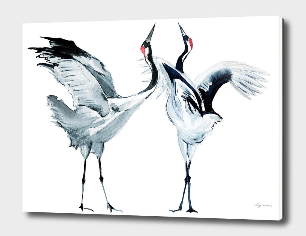 Cranes watercolor
