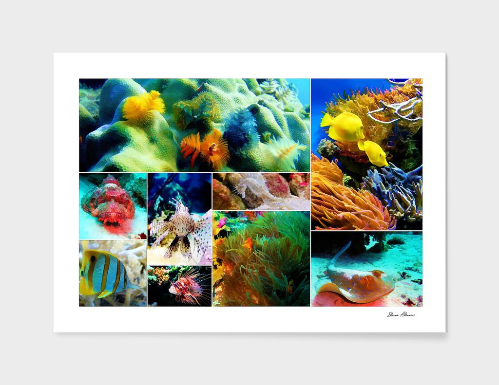 Underwater Caribbean Sea Collage