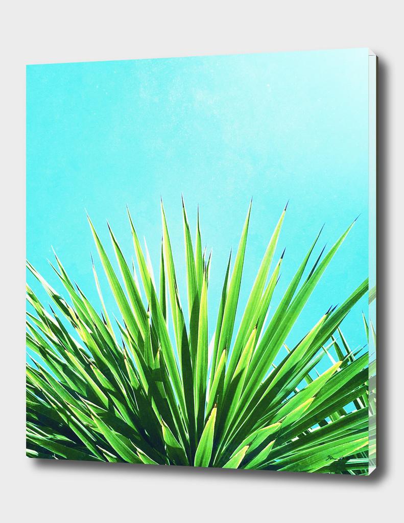 Solar Yucca Palm - Disk & Acrylic