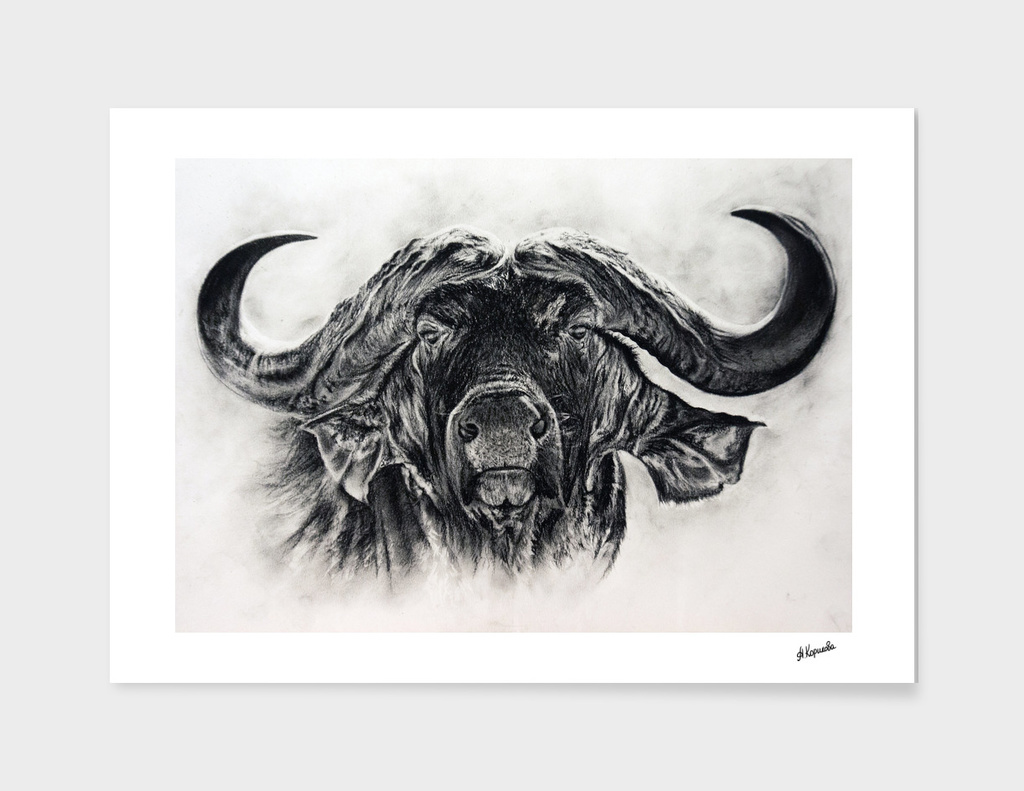 Big buffalo in charcoal