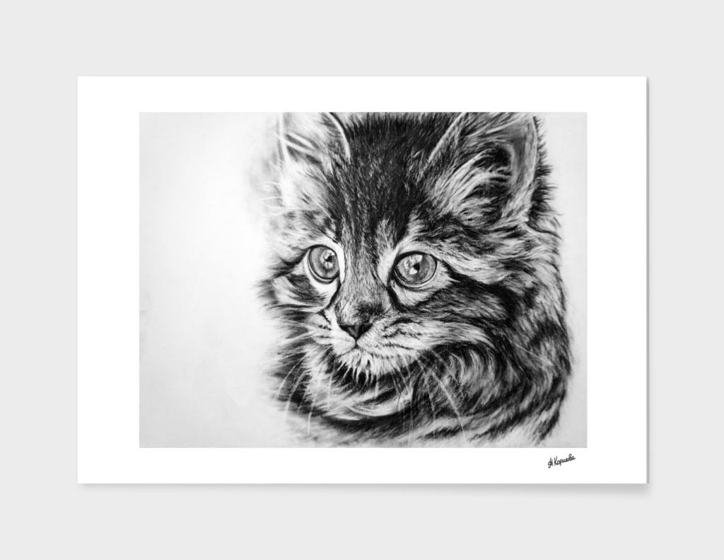 Kitten in charcoal