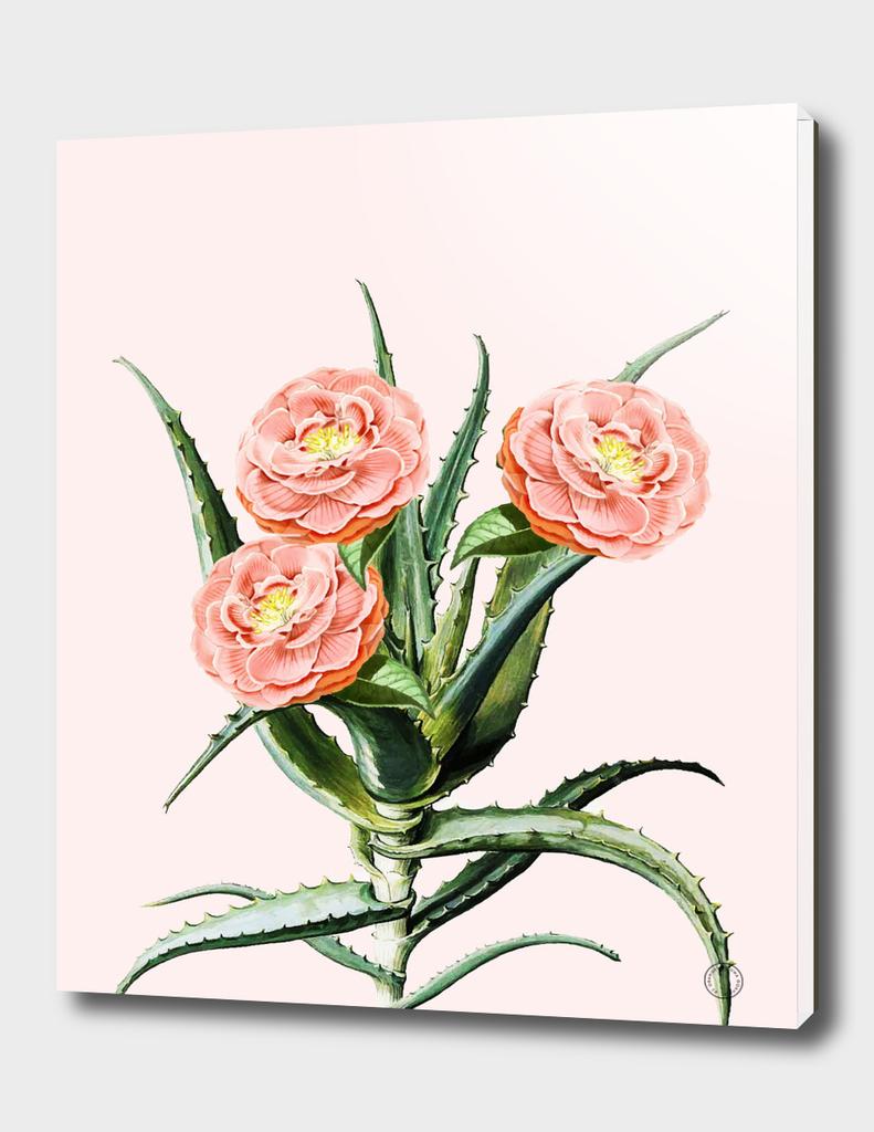 Blush Cactus II