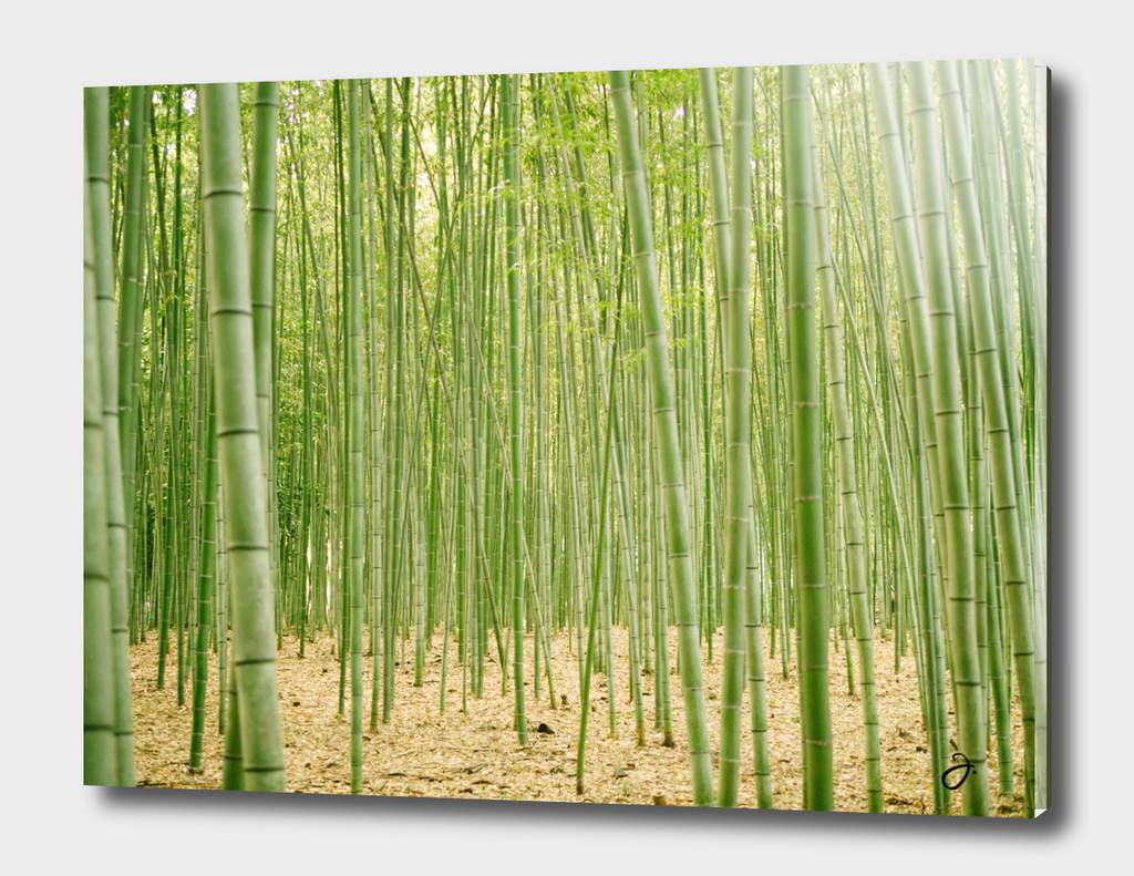 Into Bamboo