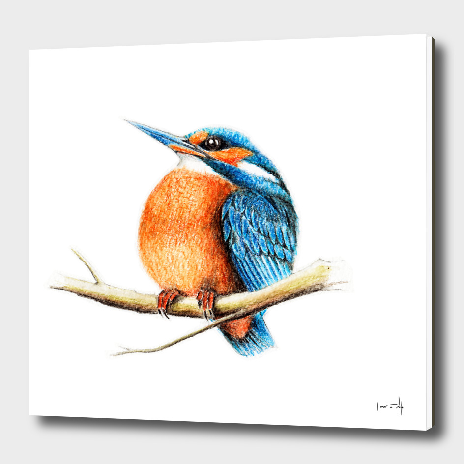 Bird: Kingfisher