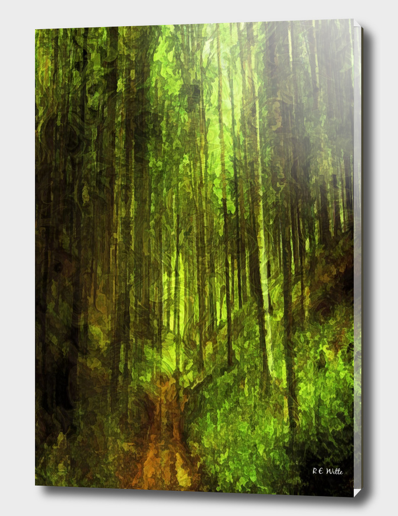 Forest Tree Path