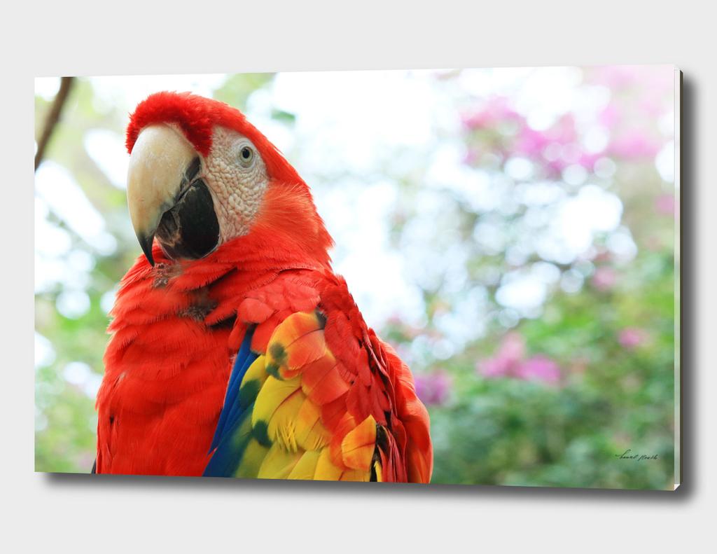 Mister Parrot