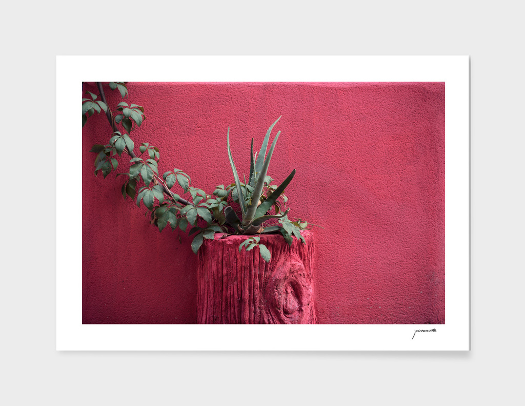 Pink and plant