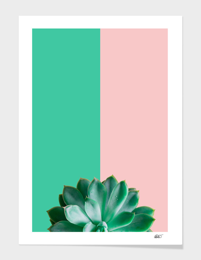 Turquoise  and Rose Succulent