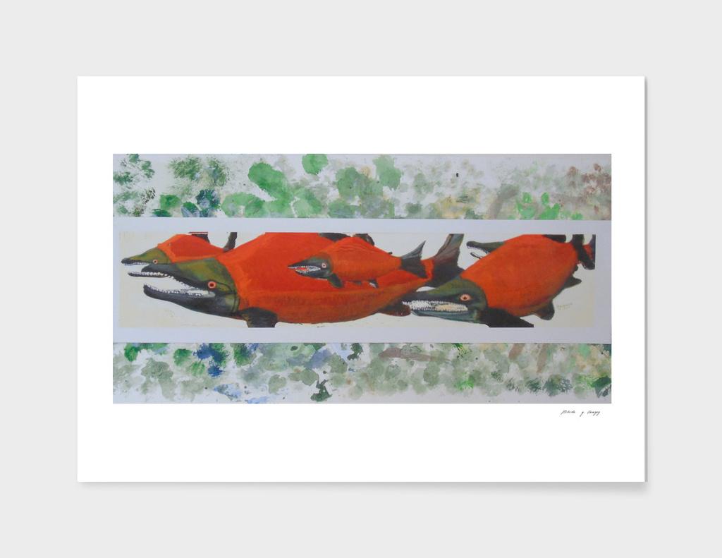 Sackeye  Salmon