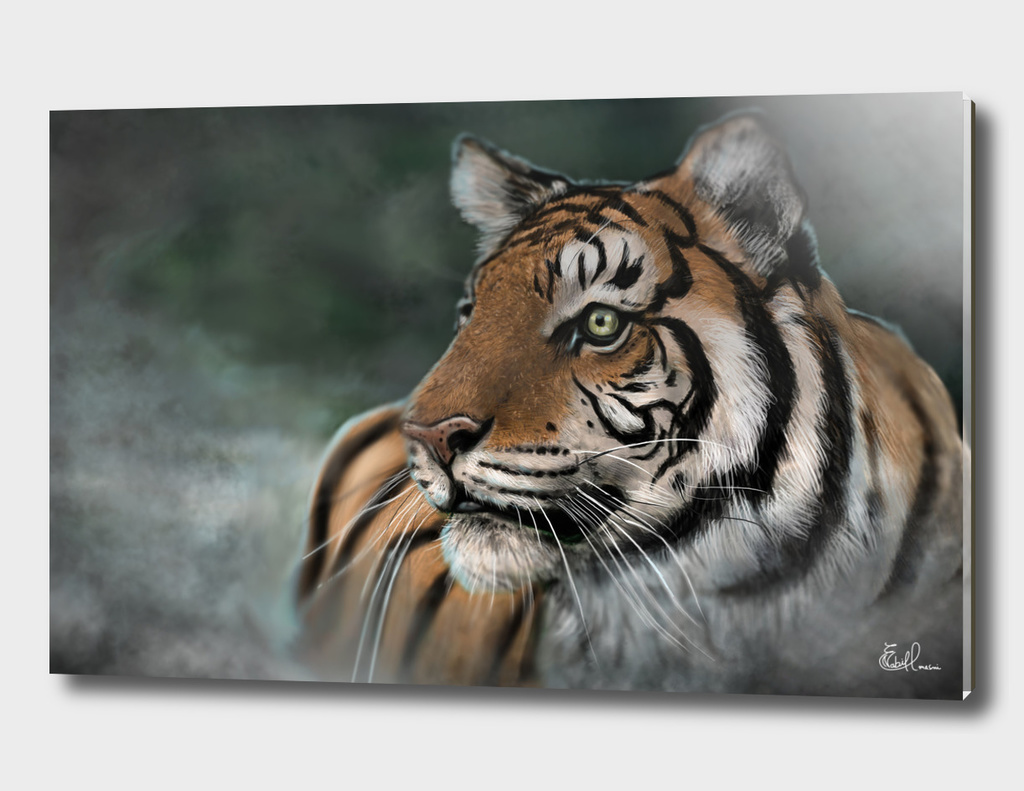 Tiger in the fog