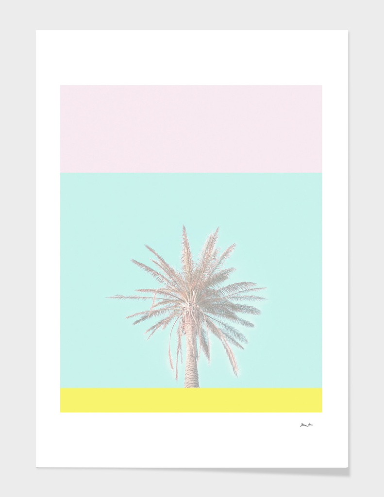 Pastel Candy Palm