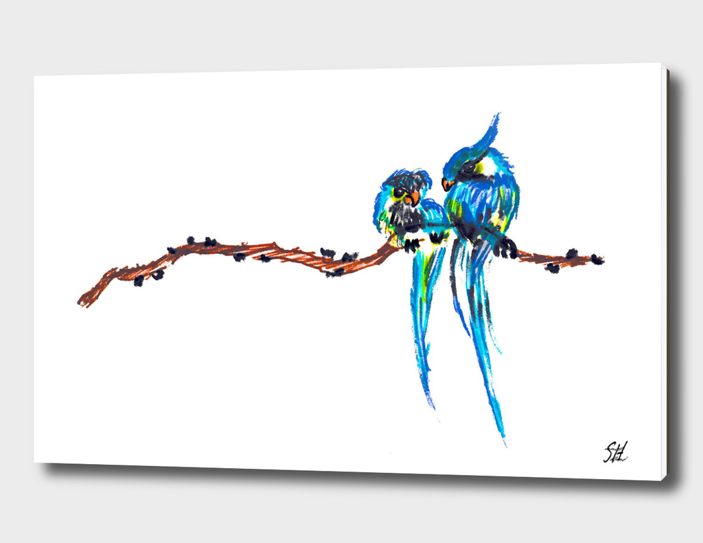 Colorful Bird Couple On A Branch