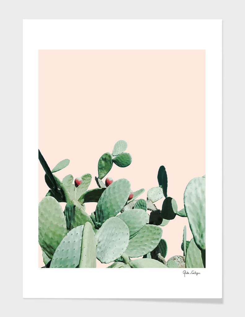 Cactus culture