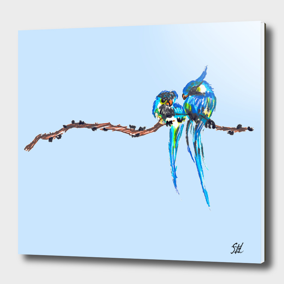 Colorful Bird Couple On A Branch, Blue Back